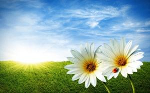 Nature-White-Flower-In-Summer